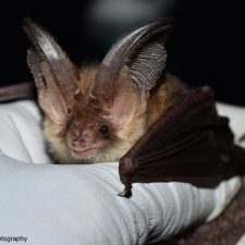 Cambridgeshire-Bat-Group-Logo - Christchurch Eco